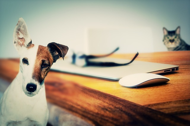 超正外國公司福利:無工時、寵物假、健身教練